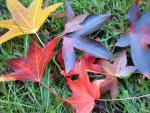 Плахотник Л.Ю. Осенние листья